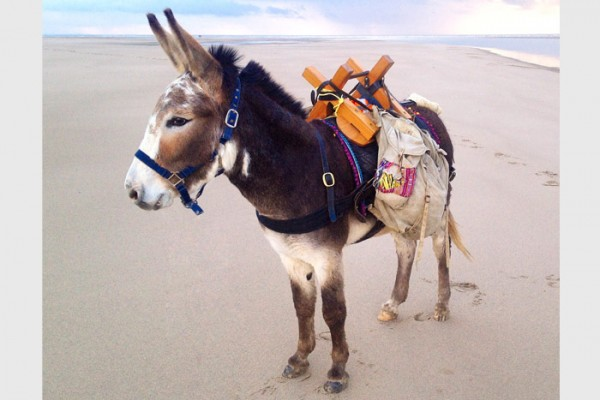 Seaside Donkey